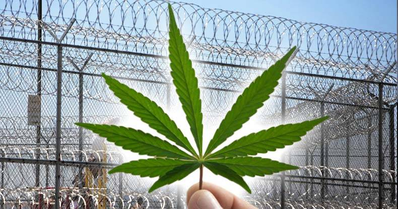 The Case For Cannabis: Effectiveness of The Prison System